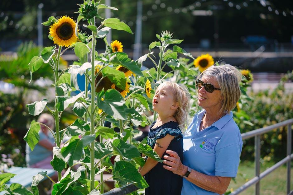 Enjoying sunflowers with Kingsbridge in Bloom