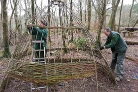 Building the willow teepee