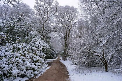 The snow proves RHS Garden Harlow Carr with a fairytale look