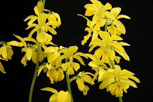 Hardy Orchids To Try At Home Rhs Gardening