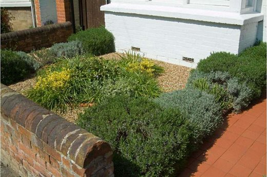 Urban greening: wildlife and environment ideas for gardens from RHS ...