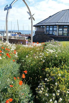 North Berwick's coastal wildflower bed
