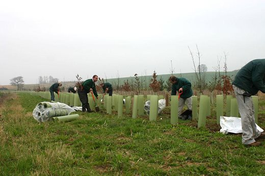 Planting the Wild Wood in 2005