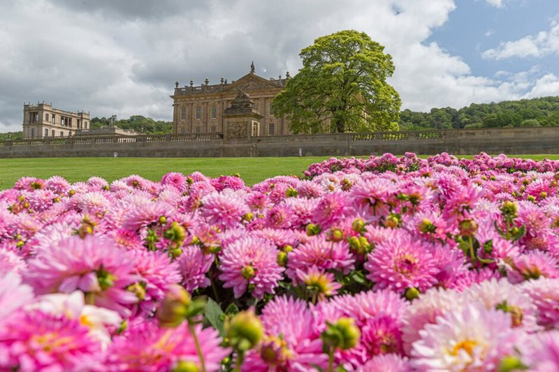 Dahlias in front of Chatsworth House