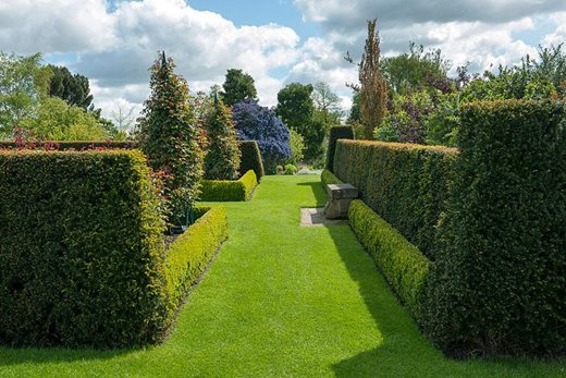 Yew clipped hedges