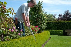 trimminghedges3x2 June gardening tips - Trees & Shrubs