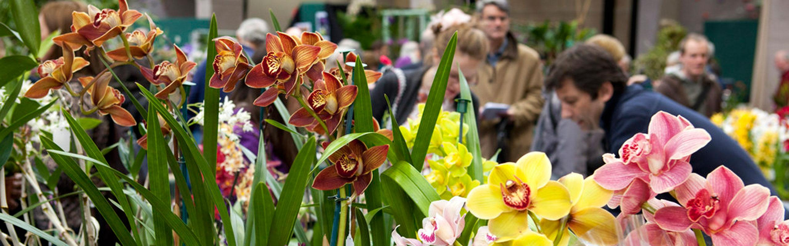 Beautiful spring plants at the RHS Plant and Potato Fair