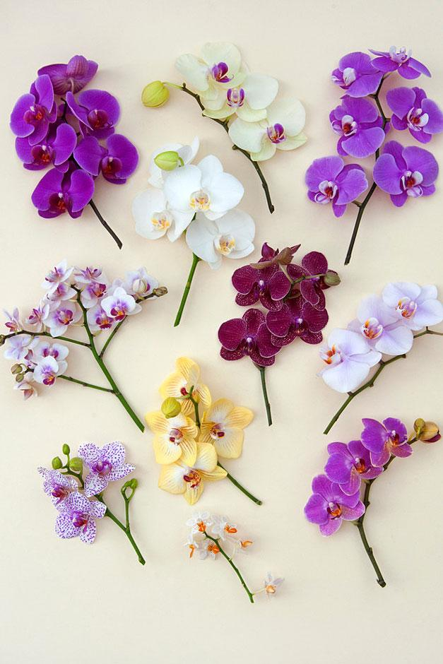 Orchids to grow at home / RHS Gardening