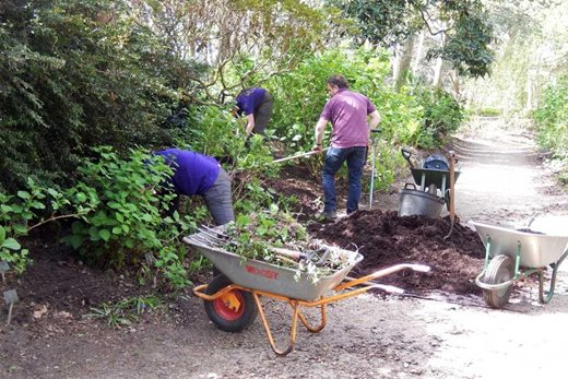 Mulching and weeding in preparation