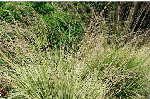 See our top 10 autumn ornamental grasses for the garden for Short variegated grass