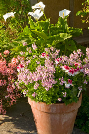 Bedding Plants And Displays Rhs Gardening, What Does Bedding Plant Mean