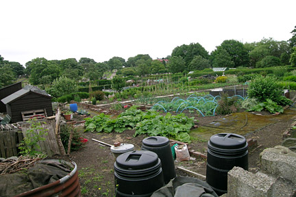 Starting An Allotment