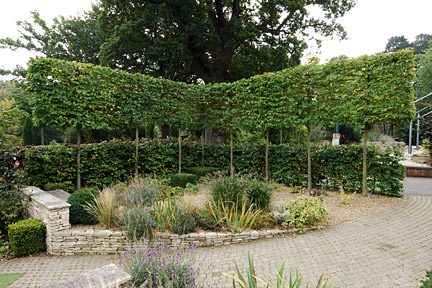 A pleached hedge at RHS Garden Wisley.