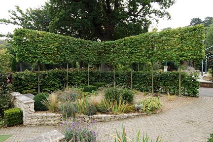 Rhs Gardening Tips Advice On Hedges Rhs Gardening