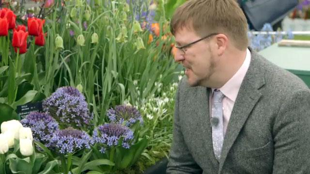 Chelsea show plants for real gardens