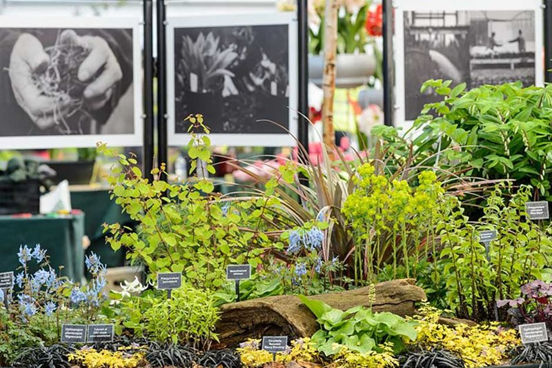 Tale Valley Nursery stand at RHS Cardiff Flower Show