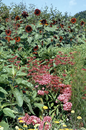 Revitalising an over-mature border