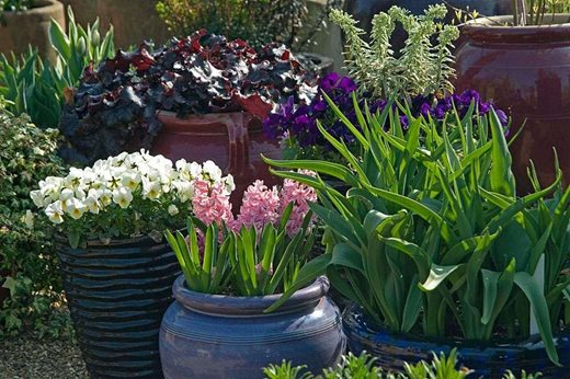 planting in containers is a great way to create displays that you can