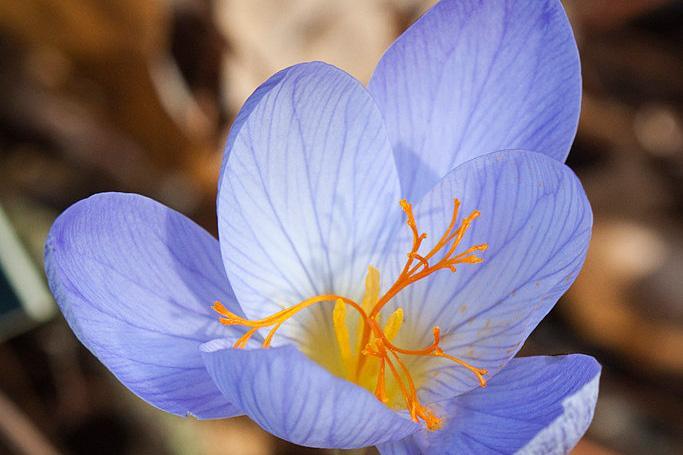 2f2c057b279857 Plantsmanship   RHS Gardening