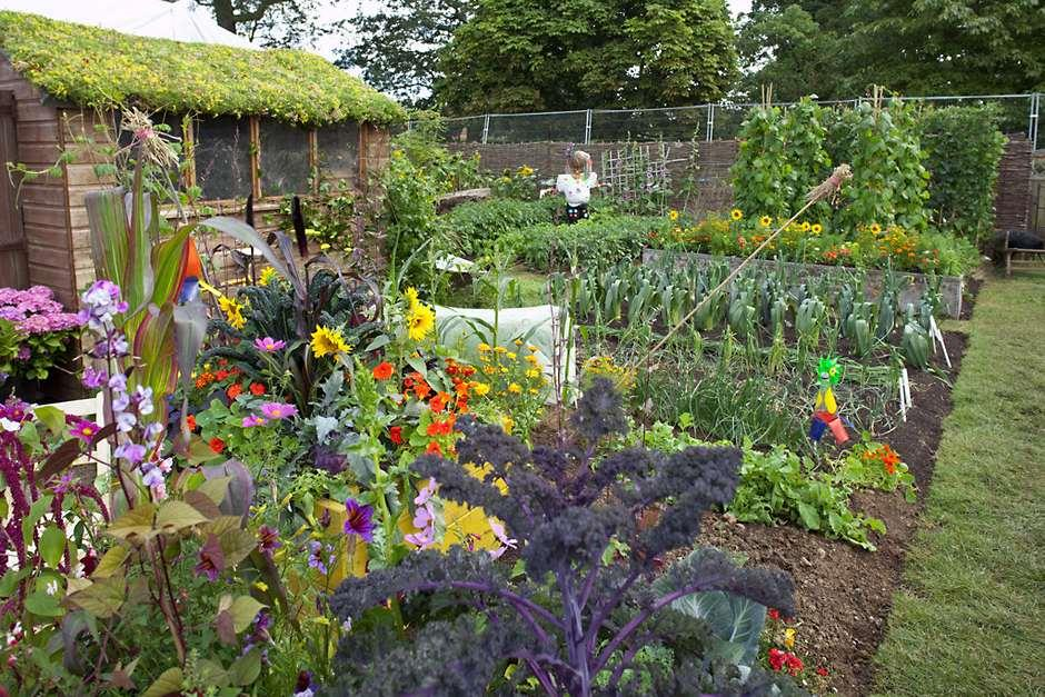 Roses In Garden: Allotments: How Get The Best From Your Plot / RHS Gardening