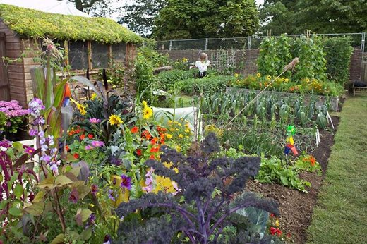 Allotments How Get The Best From Your Plot Rhs Gardening
