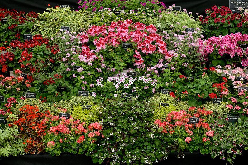 Malvern Spring Flower Show