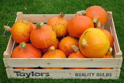 Pumpkins and winter squashes: storing