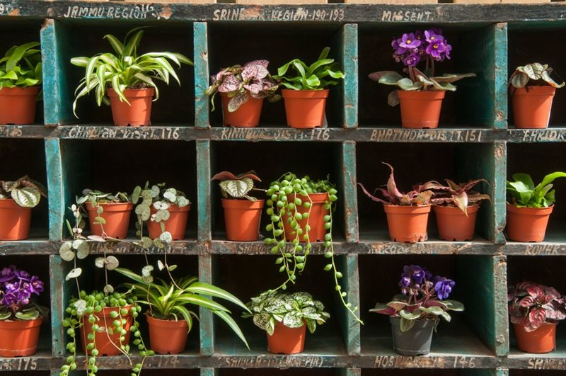Houseplants at the RHS Malvern Spring Festival / RHS Gardening