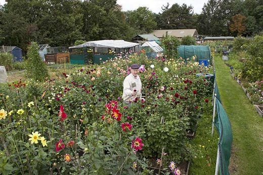 Make your allotment more colourful with herbs and flowers / RHS Gardening