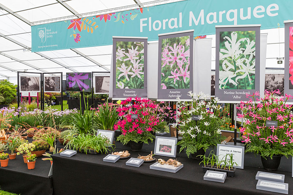 Hoyland Plant Centre Master Grower at Chatsworth Flower Show 2017