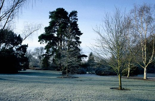 frosty lawns in Seven Acres at Wisley