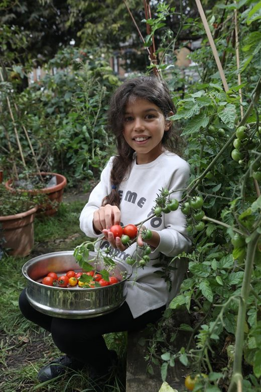 girls watering tomatoes
