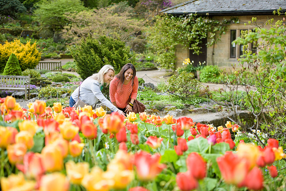 Visitors admiring tulips at Harlow Carr