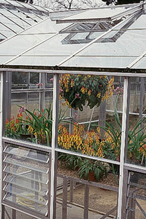 Greenhouses need to be well ventilated to prevent dampness and mould. Image: RHS/John Trenholm