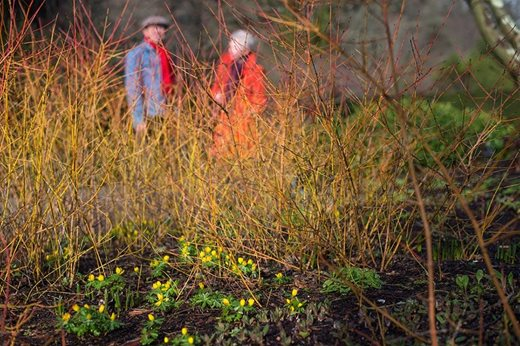 Visitors looking at bright winter stems
