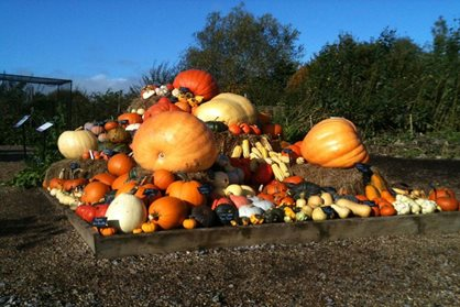 The pumpkin display at RHS Garden Hyde Hall this year