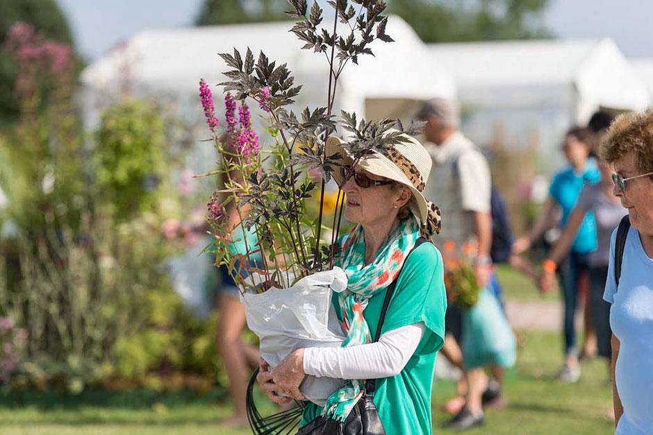 Harlow Carr Flower Show