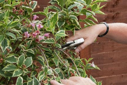 RHS Pruning groups / RHS Gardening