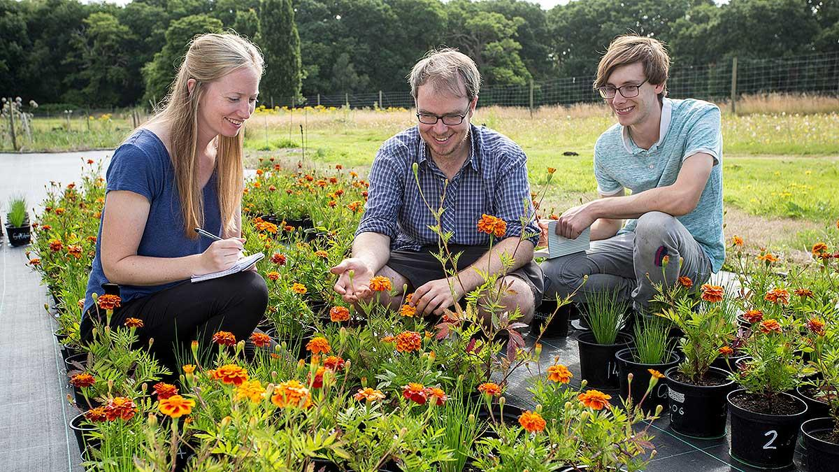 Rhs horticultural training and qualifications rhs gardening for Gardening qualifications