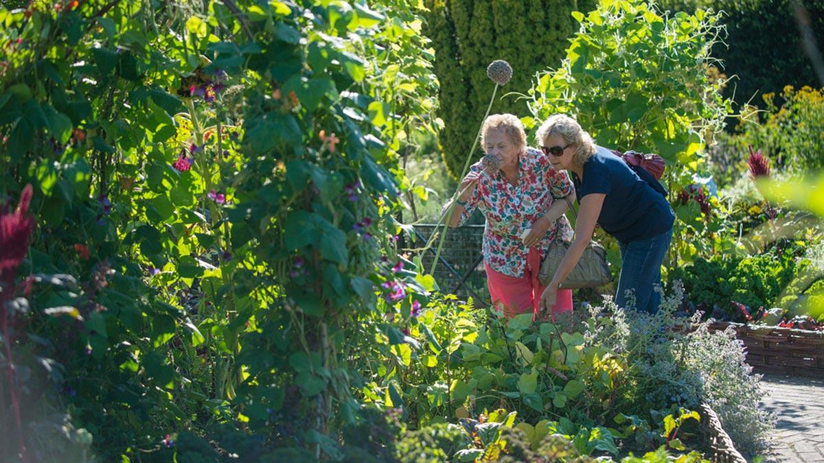 Visitors in the fruit and vegetable garden
