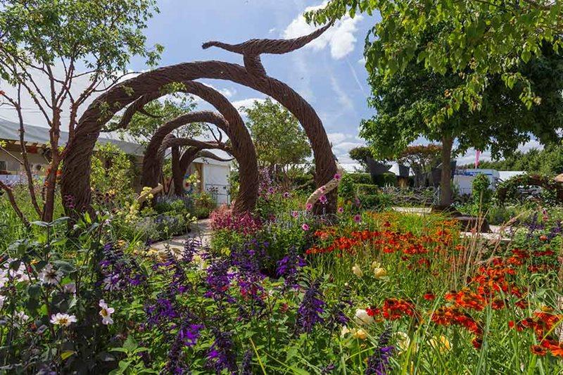 Roses In Garden: Submitting A Garden Design To RHS Hampton Court Flower