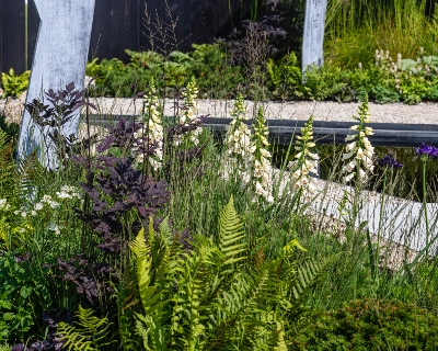<p>Garden trends for 2021: a new wave of wildflowers</p>