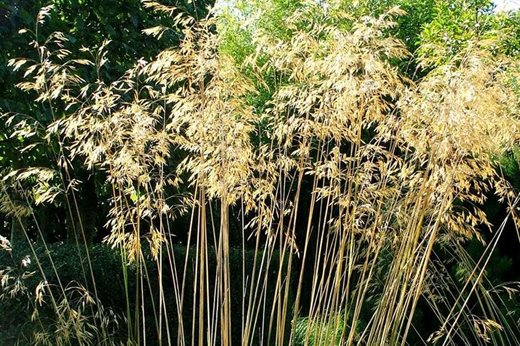 See our top 10 autumn ornamental grasses for the garden for Best ornamental grasses for full sun