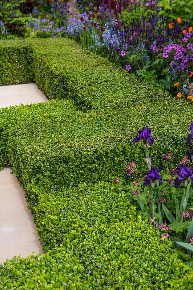 Garden design formal garden plants / RHS Gardening