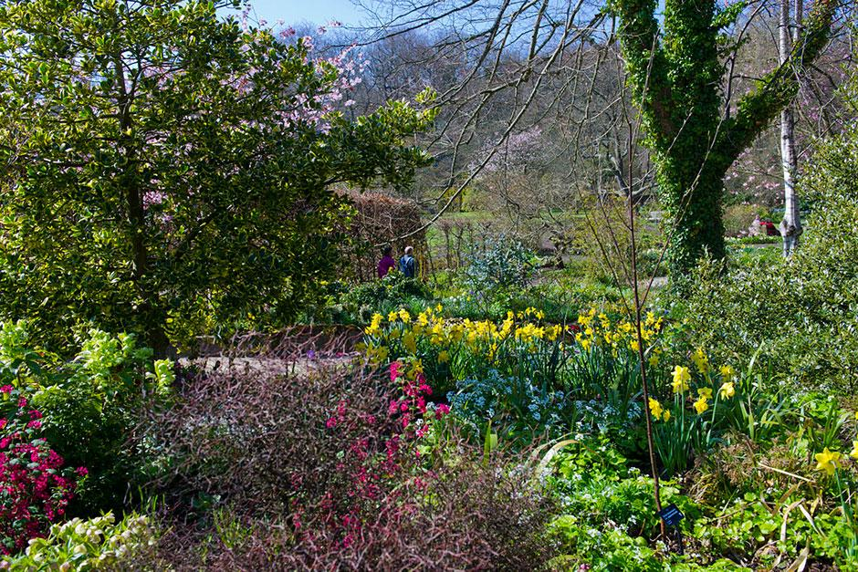 Rhs garden design peion garden ftempo for Garden design winter 2018