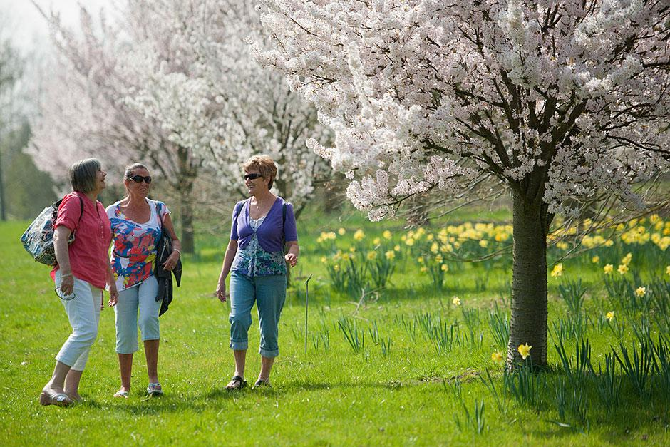Visitors with daffodils and blossom