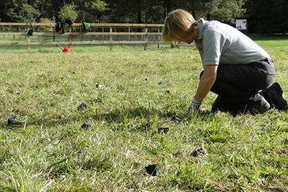 Planting plug plants in wildflower area
