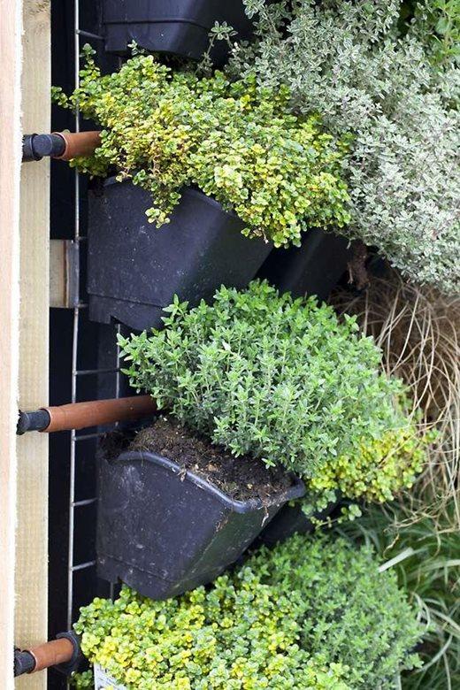 Vertical vegetable gardening / RHS Gardening