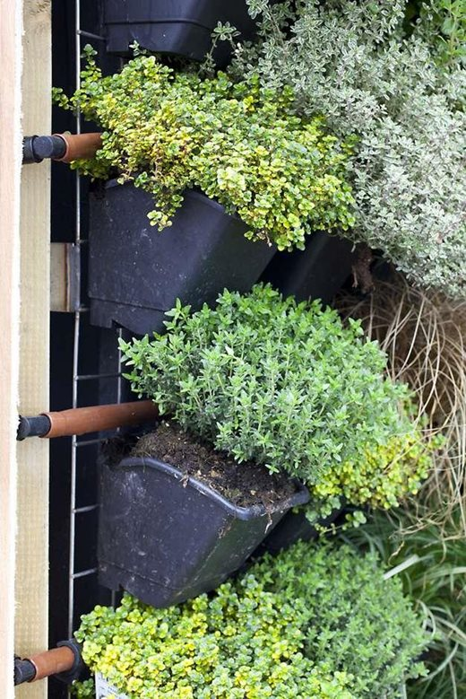 Vertical Vegetable Gardening Rhs Gardening