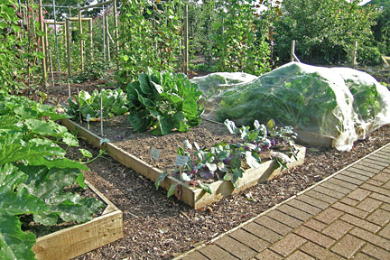 Raised vegetable beds. Credit: RHS Advisory.